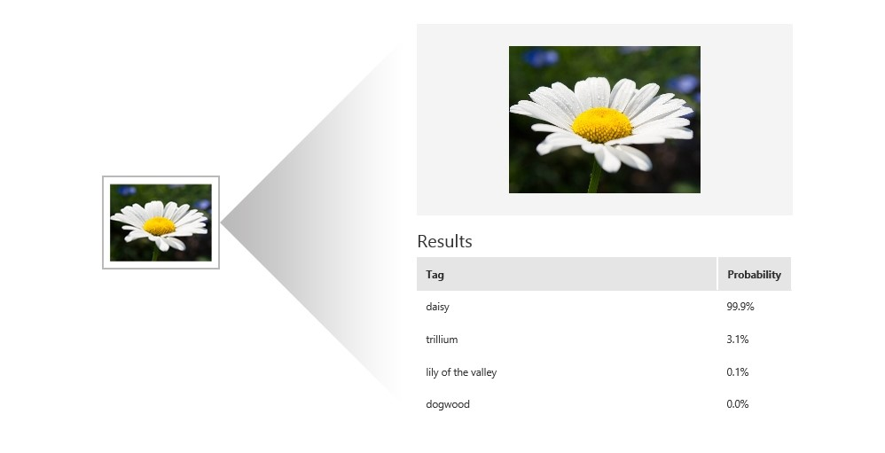 Machine learning determining that a photo of a daisy is a photo of a daisy.