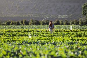 Woman in a vegetable field with FarmBeats graphics surrounding her
