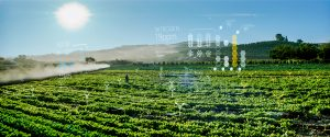 Photography depicts Microsoft's FarmBeats technology uses AI and IoT to help increase farm productivity.
