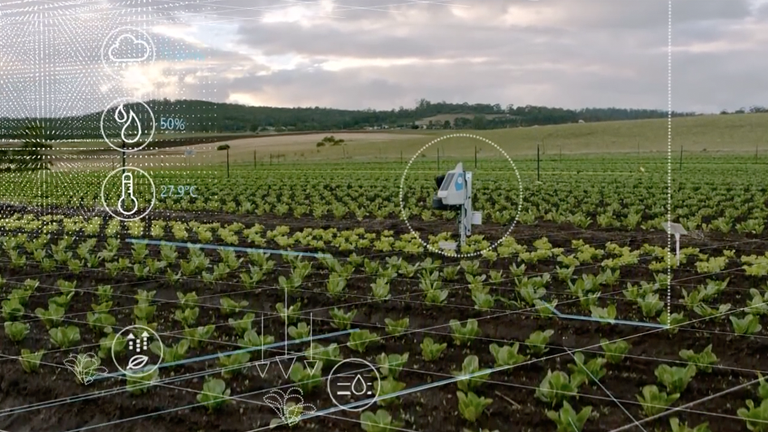 Sustainable farming field with robot